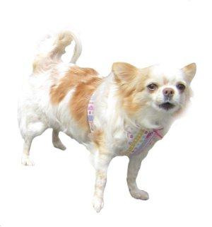 画像1: 犬用 クールエプロン型紙・小型犬用(P)