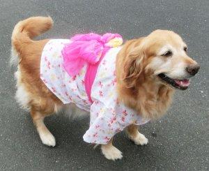 画像1: 【犬服】浴衣型紙(大型犬用)