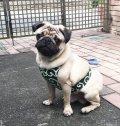 【犬用】クールエプロン型紙・小型犬用(XS、S)