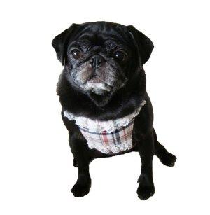 画像3: 犬用 クールエプロン型紙・小型犬用(P)