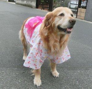画像4: 【犬服】浴衣型紙(大型犬用)