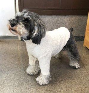 画像2: 犬服 ハイネック長袖Tシャツ型紙 小型犬〜中型犬用