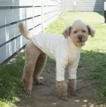 犬服 ハイネック長袖Tシャツ型紙 小型犬〜中型犬用