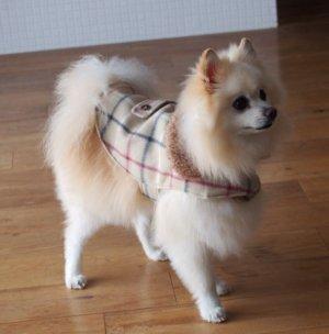 画像1: 犬服 おでかけコート型紙 小型犬〜中型犬用