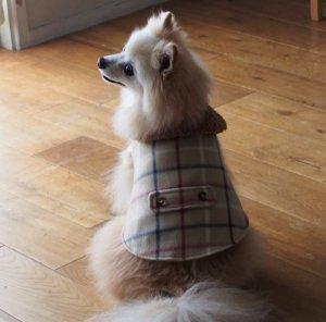 画像2: 犬服 おでかけコート型紙 小型犬〜中型犬用