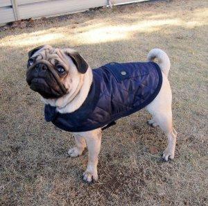 画像2: 犬服 キルティングコート型紙 小型犬〜中型犬用