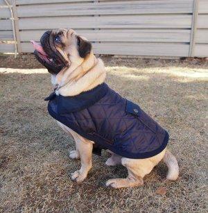画像1: 犬服 キルティングコート型紙 小型犬〜中型犬用