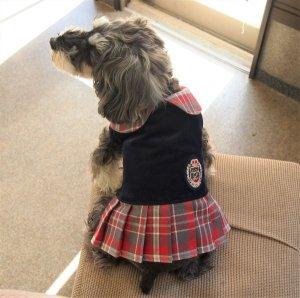 画像1: 犬服 プリーツワンピースコート型紙 小型犬〜中型犬用