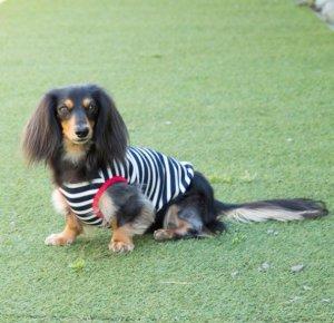 画像1: 犬服 タンクトップ型紙 小型犬〜中型犬用