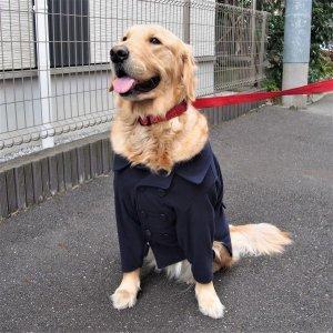 画像2: 犬服 ピーコート型紙 大型犬用