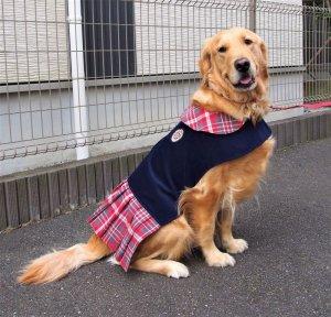 画像1: 犬服 プリーツワンピースコート型紙 大型犬用
