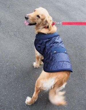 画像2: 犬服 キルティングコート型紙 大型犬用