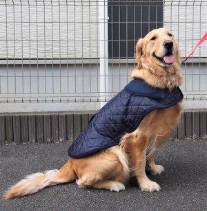 画像3: 犬服 キルティングコート型紙 大型犬用