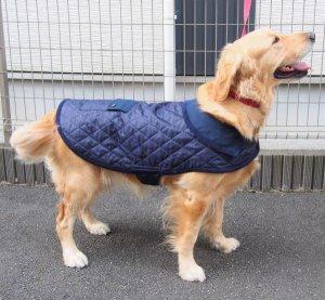 画像1: 犬服 キルティングコート型紙 大型犬用