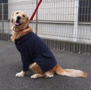 画像1: 犬服 ピーコート型紙 大型犬用