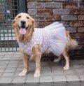 犬服 チュールワンピース型紙 大型犬用
