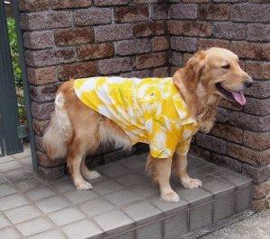 画像2: 犬服 アロハシャツ型紙 大型犬用