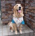 犬服 キャップスリーブタンクトップ型紙 大型犬用