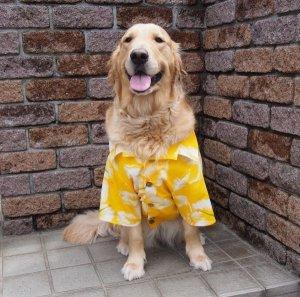 画像3: 犬服 アロハシャツ型紙 大型犬用
