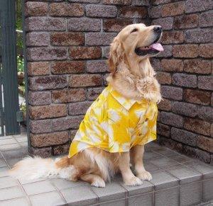 画像1: 犬服 アロハシャツ型紙 大型犬用