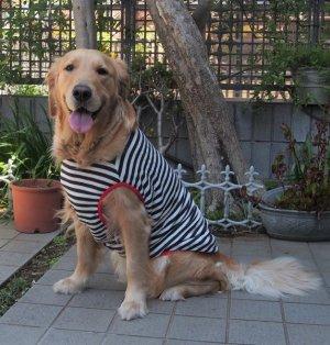 画像2: 犬服 タンクトップ型紙 大型犬用