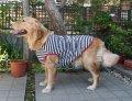 犬服 タンクトップ型紙(パイピング仕様) 大型犬用