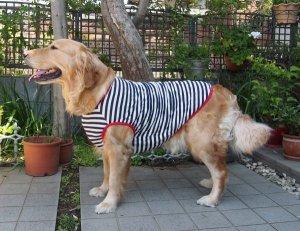 画像1: 犬服 タンクトップ型紙 大型犬用