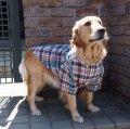 犬服 ボタンダウンシャツ型紙 大型犬用