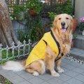 犬服 ちゃんちゃんこ型紙 大型犬用