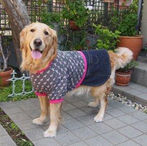 画像2: 犬服 デニムスカート付きTシャツ型紙 大型犬用