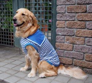 画像1: 犬服 セーラーカラータンクトップ型紙 大型犬用