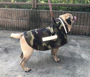 画像1: 犬服 レインコート型紙 小型犬〜中型犬用