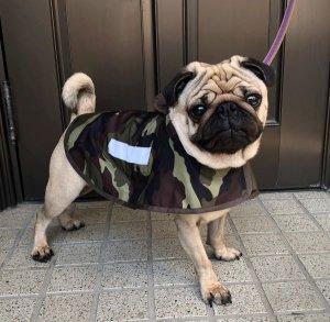 画像2: 犬服 レインコート型紙 小型犬〜中型犬用