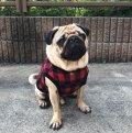犬服 前あきタンクトップ型紙 小型犬〜中型犬用
