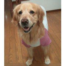 他の写真1: 【犬服】ラグランTシャツ型紙(大型犬用)