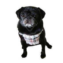 他の写真1: 【犬用】クールエプロン型紙・小型犬用(XS、S)