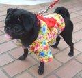 【犬服】浴衣型紙(小型犬用)