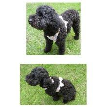 他の写真3: 【犬用】クールエプロン型紙・小型犬用(XS、S)