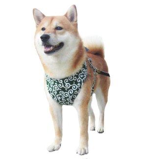 画像1: 【犬用】クールエプロン型紙・中型犬用(M)